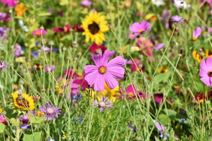 Blumenwiese mit bunten Blumen.